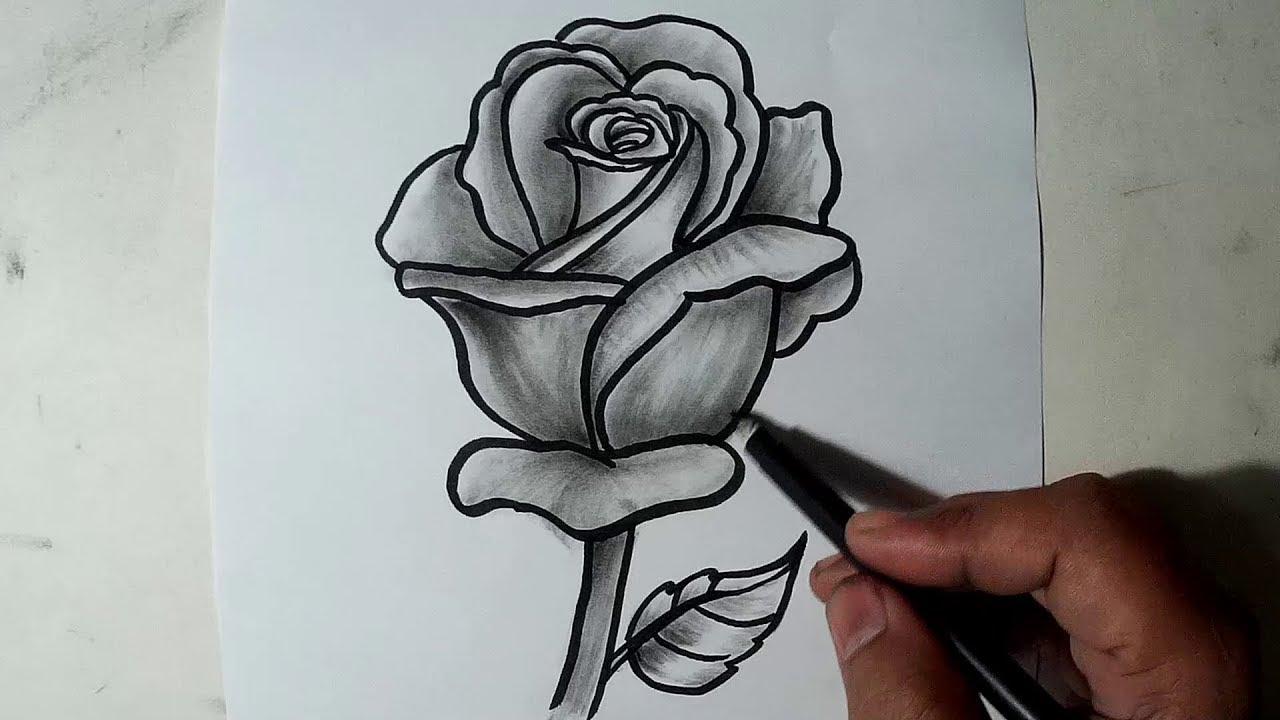 Hoa hồng hình ảnh được vẽ bằng bút chì