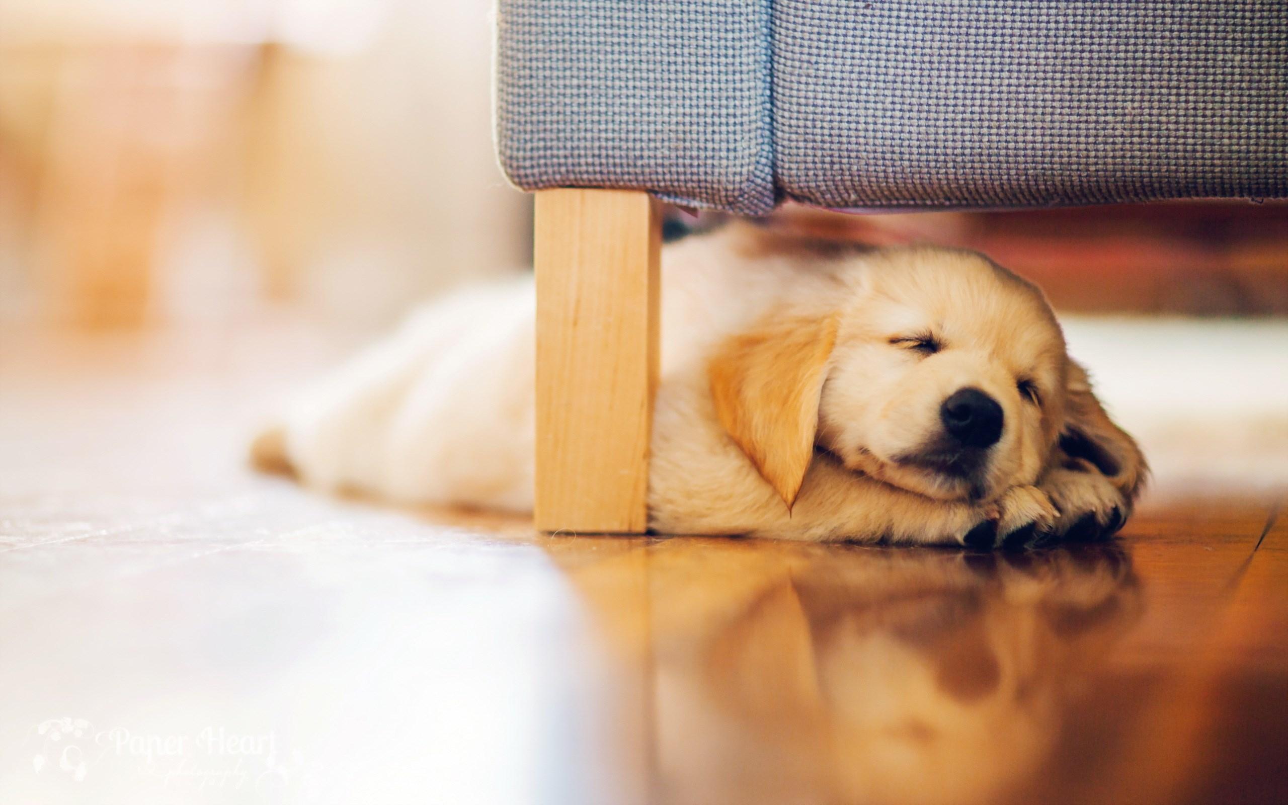 Những hình ảnh buồn ngủ của các chú cho đáng yêu