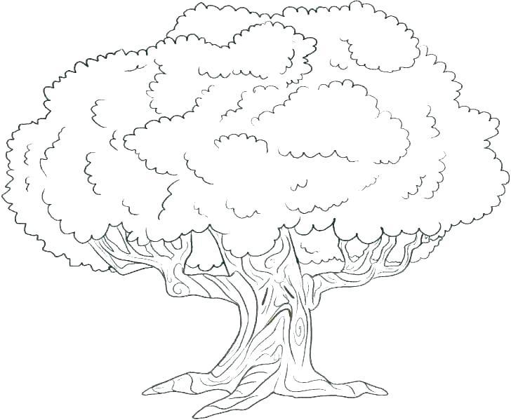 Tranh cây xanh tô màu