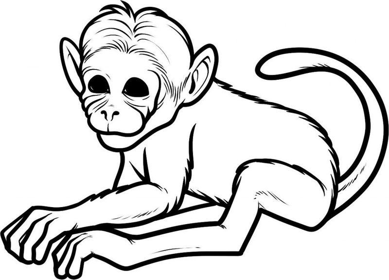 Tranh chú khỉ tô màu