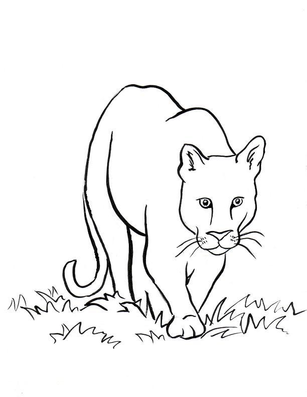 Tranh sư tử núi tô màu