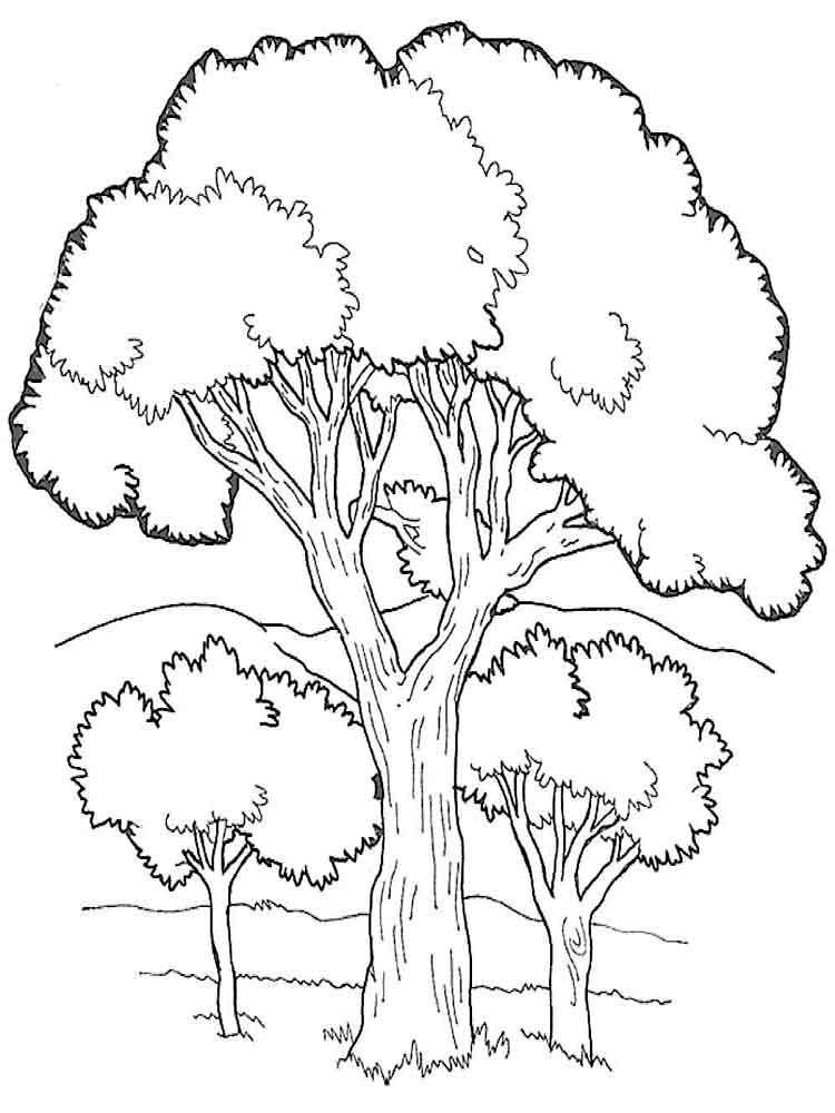 Tranh tô màu các loài cây xanh