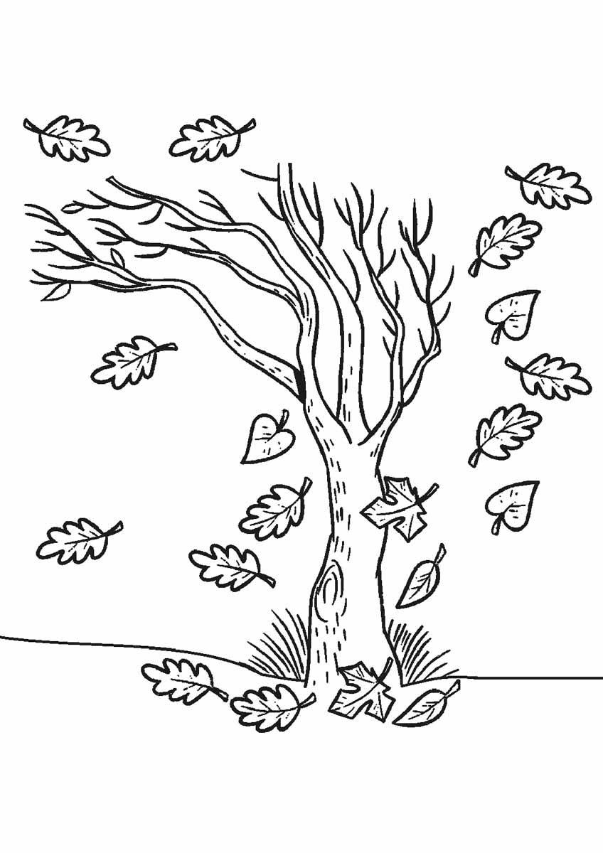Tranh tô màu cây xanh rụng lá