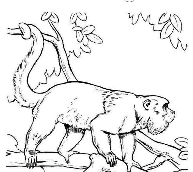 Tranh tô màu con khỉ hoang dã
