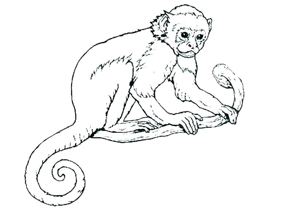 Tranh tô màu con khỉ trên cây