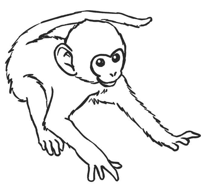 Tranh tô màu hình con khỉ cho bé