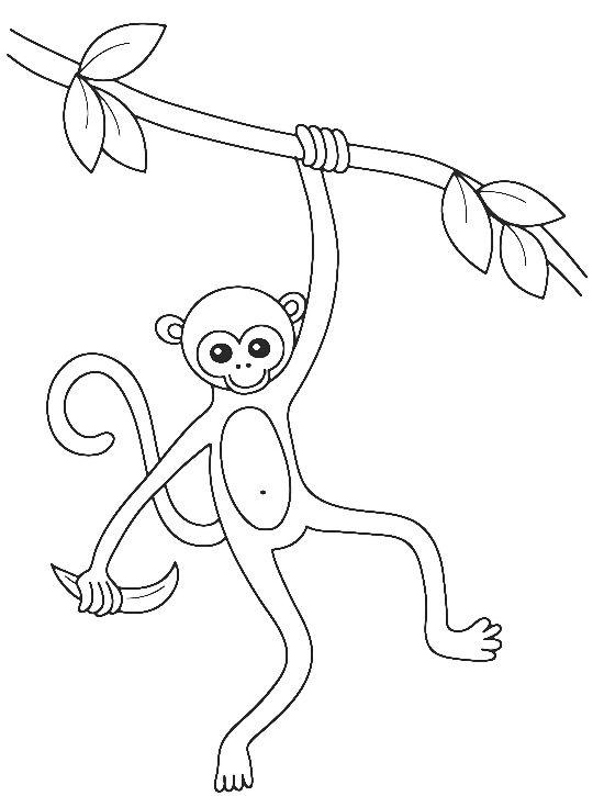 Tranh tô màu khỉ đuôi dài