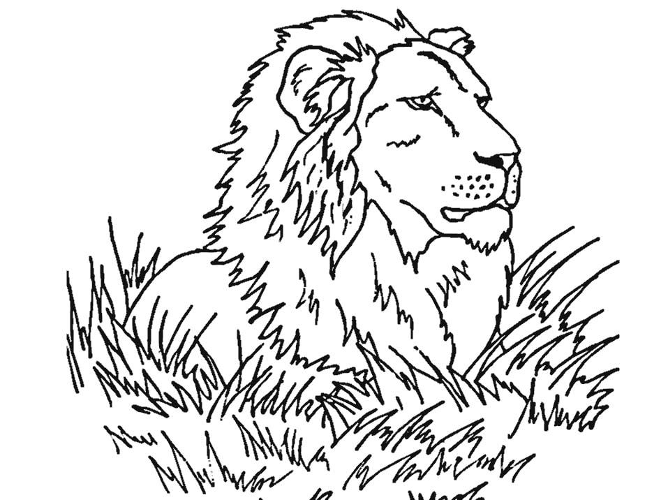 Tranh tô màu sư tử hoang dã
