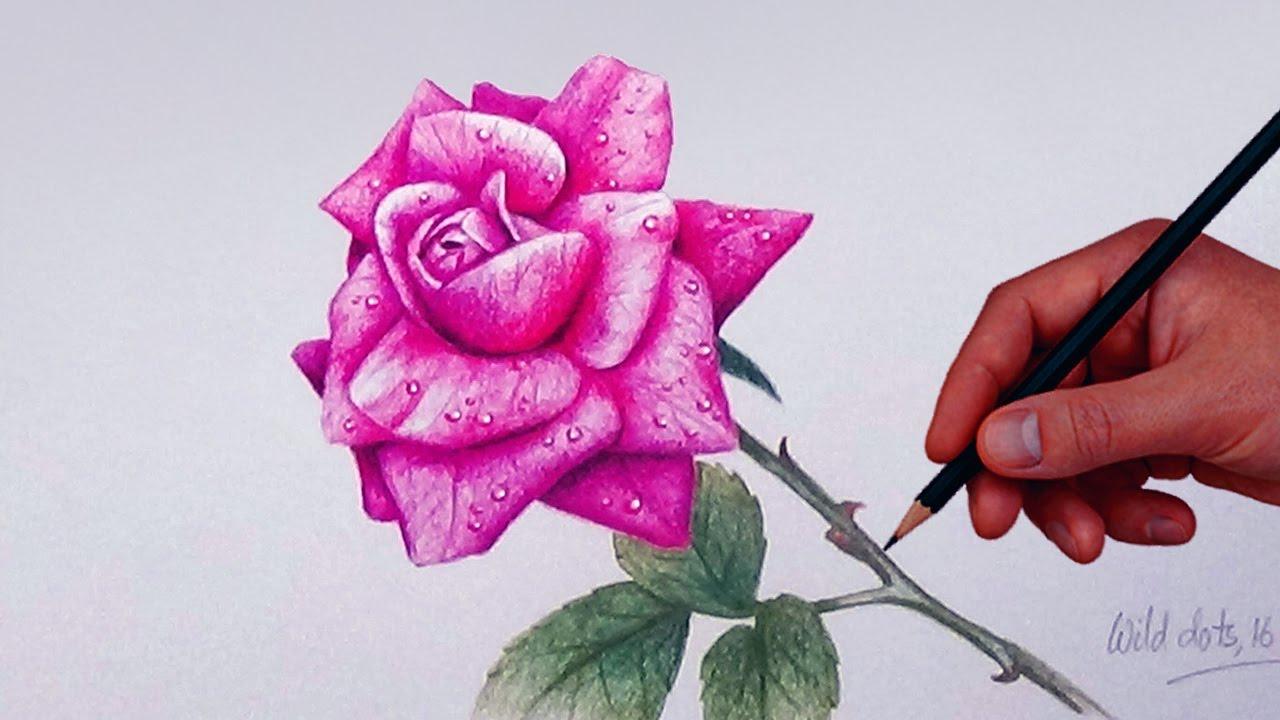 Tranh vẽ hoa hồng bằng bút chì màu đẹp nhất