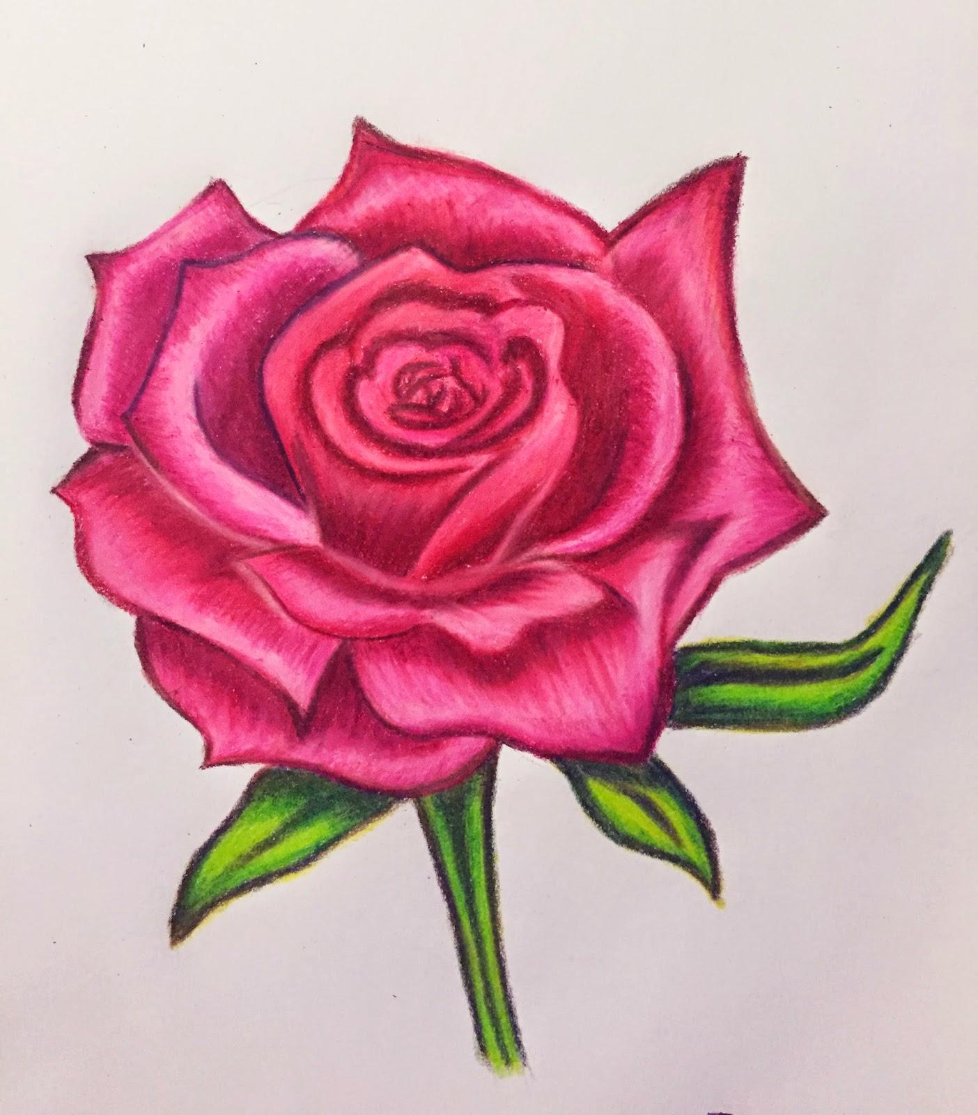 Tranh vẽ hoa hồng bằng bút chì màu hình ảnh đẹp nhất