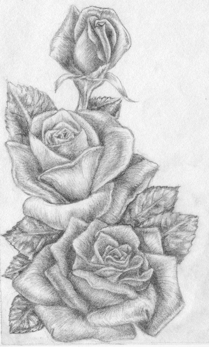 Tranh vẽ hoa hồng hình ảnh đẹp nhất