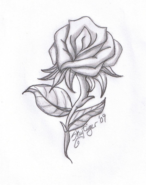 Vẽ hình ảnh hoa hồng bằng bút chì