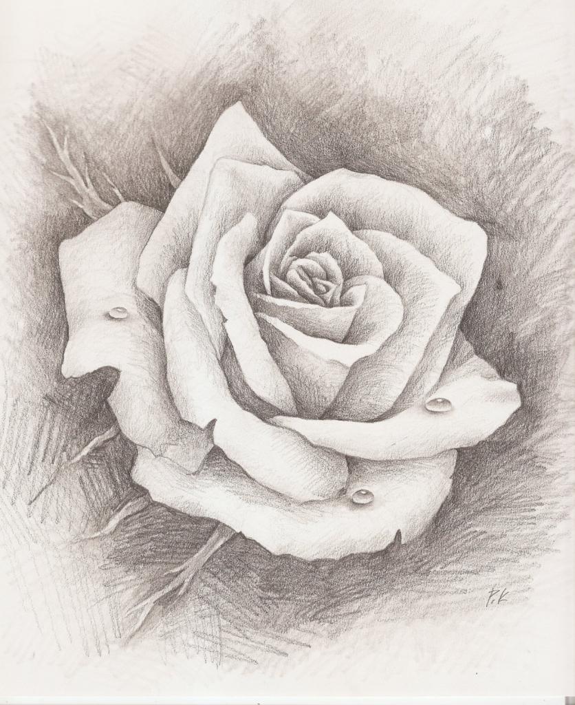 Vẽ hoa hồng bằng bút chì hình ảnh đẹp nhất