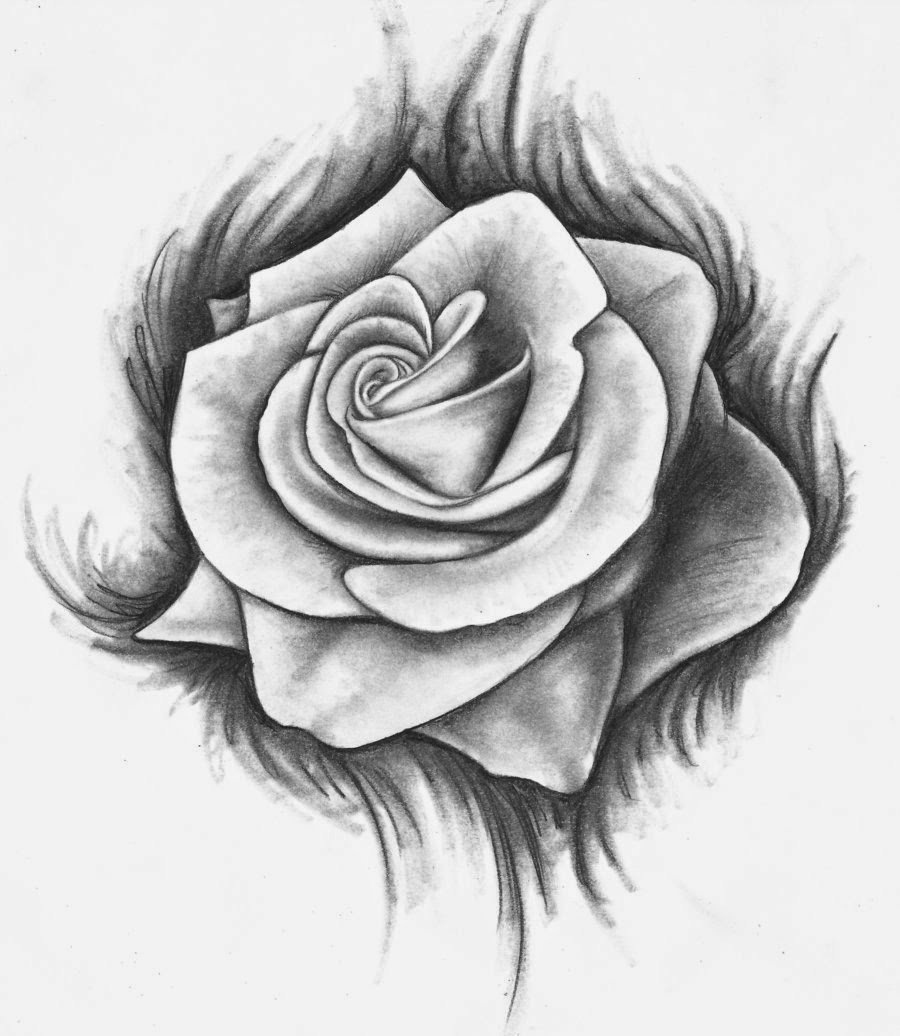 Vẽ hoa hồng nghệ thuật bằng bút chì hình ảnh đẹp nhất
