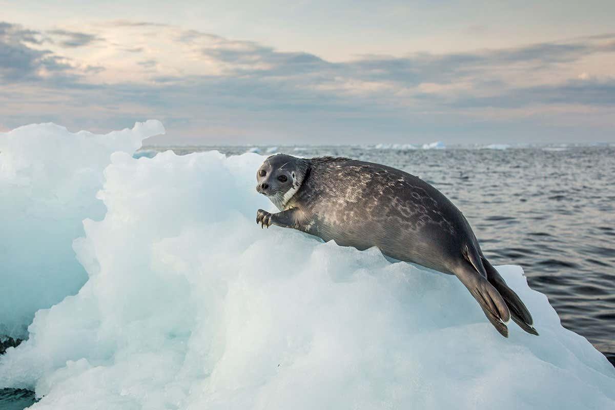 Ảnh đẹp sư tử biển