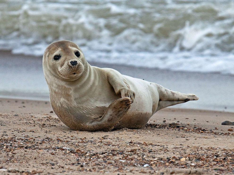 Hình ảnh con sư tử biển