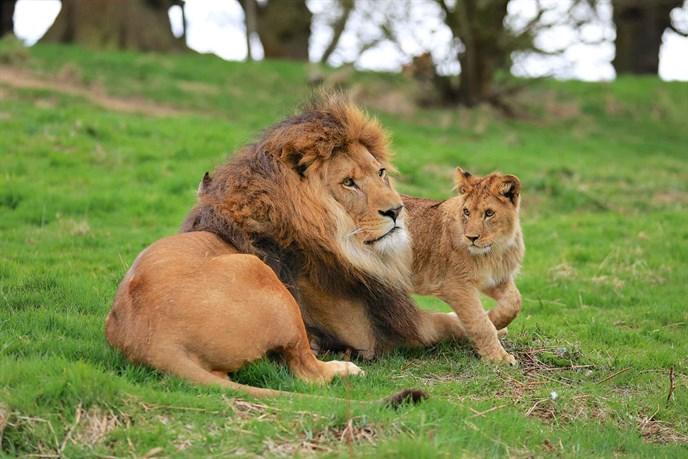Hình ảnh của sư tử