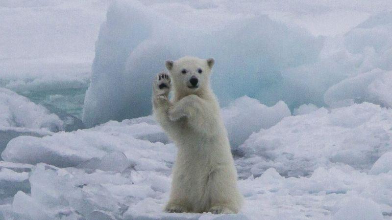 Hình ảnh gấu chào tạm biệt cute
