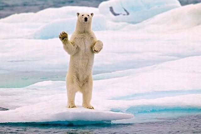 Hình ảnh gấu chào tạm biệt dễ thương