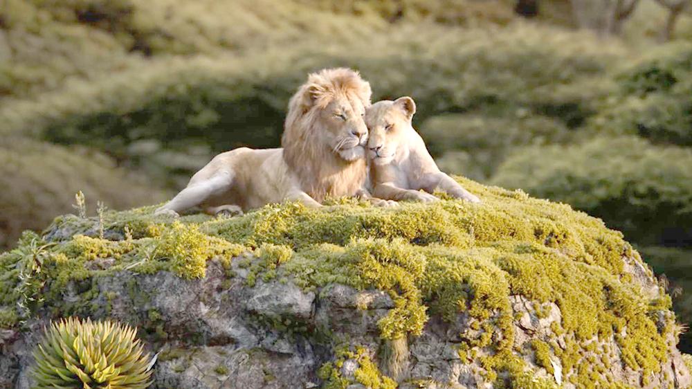 Hình ảnh sư tử đẹp nhất