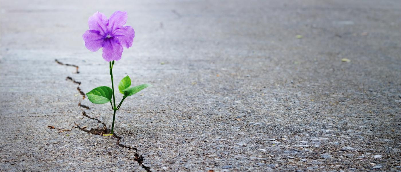 Hình ảnh về niềm hy vọng