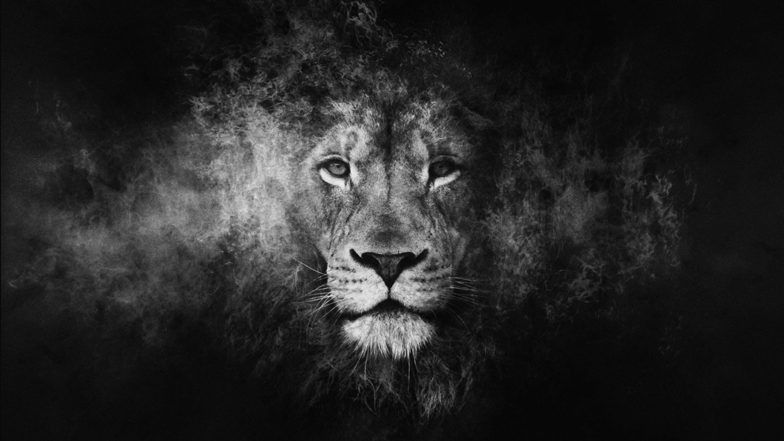 Hình nền con sư tử