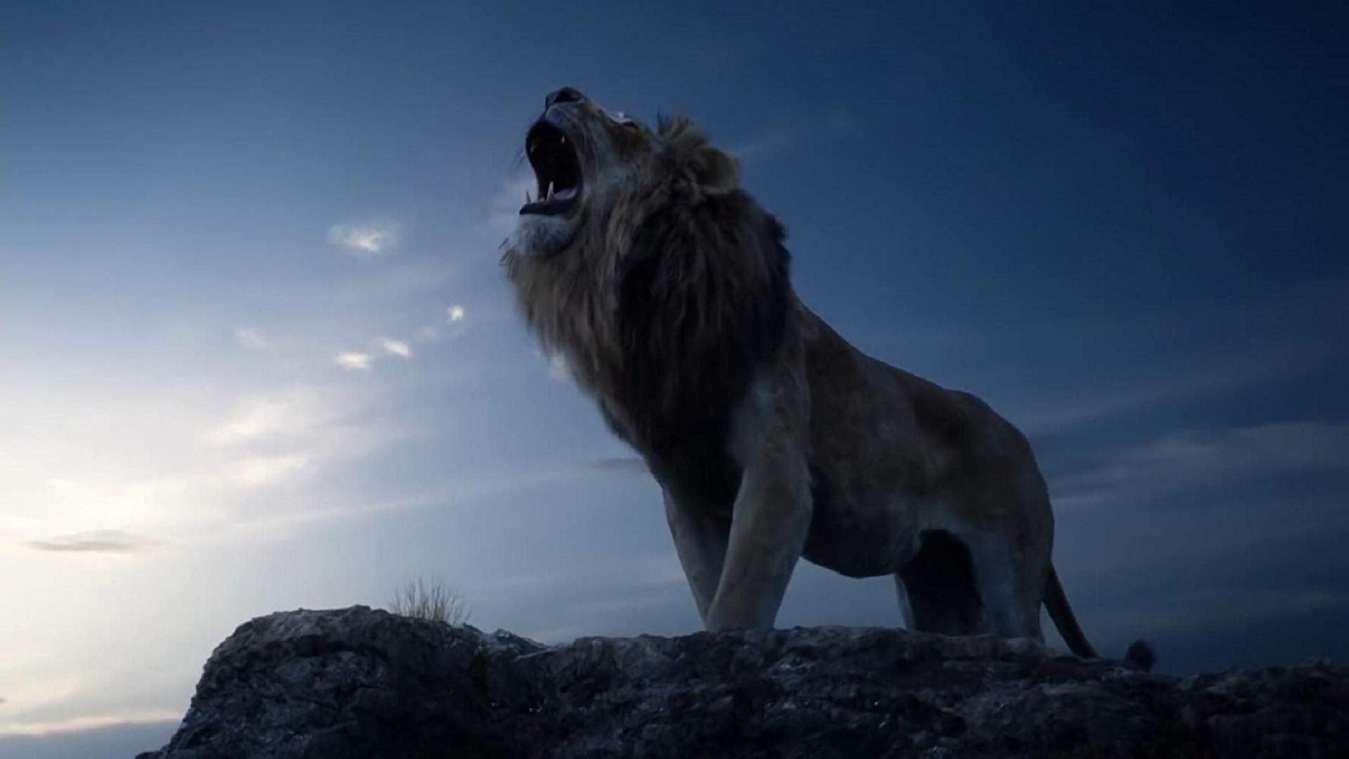 Hình nền đẹp sư tử gầm