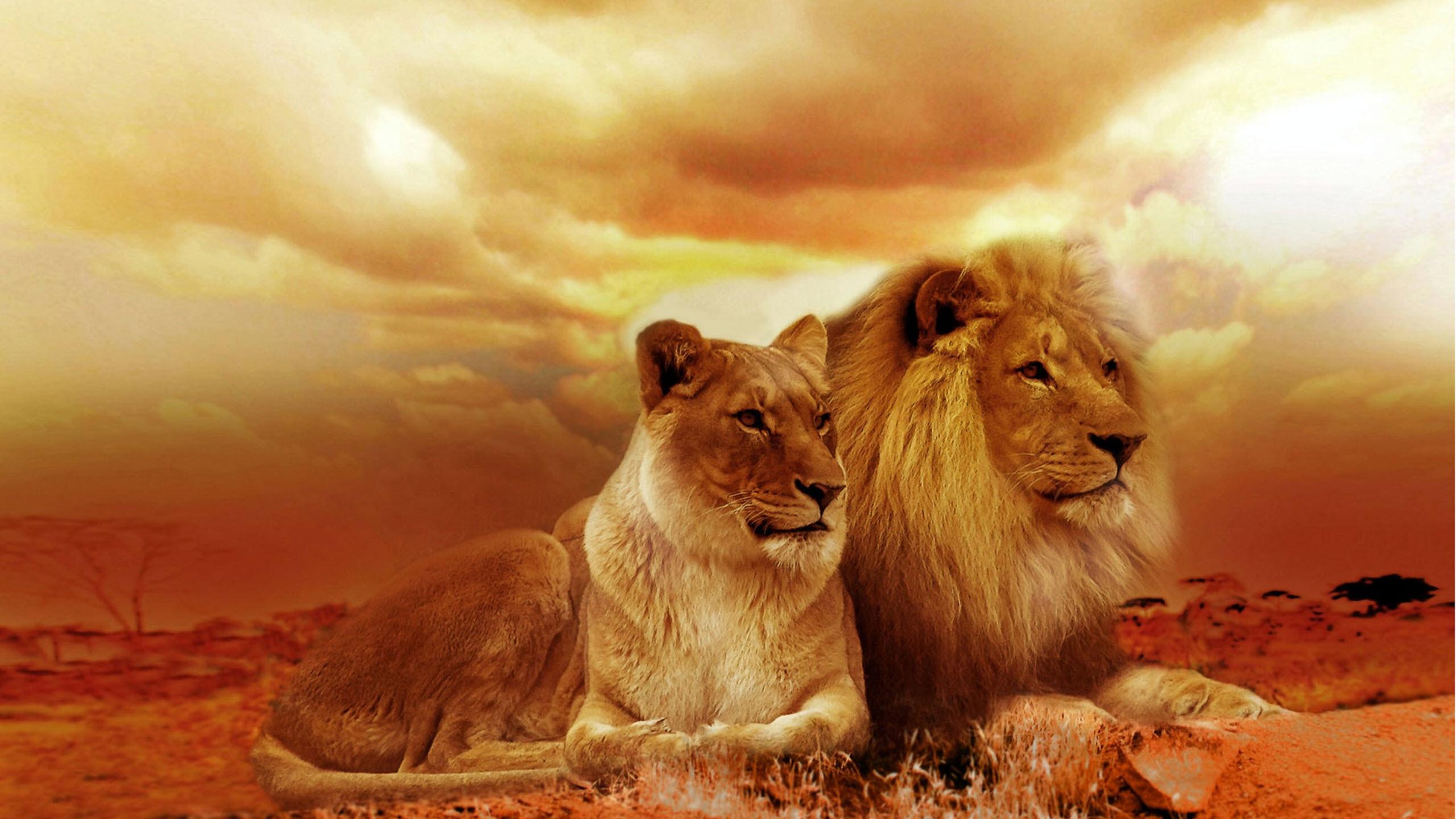 Hình nền đôi sư tử
