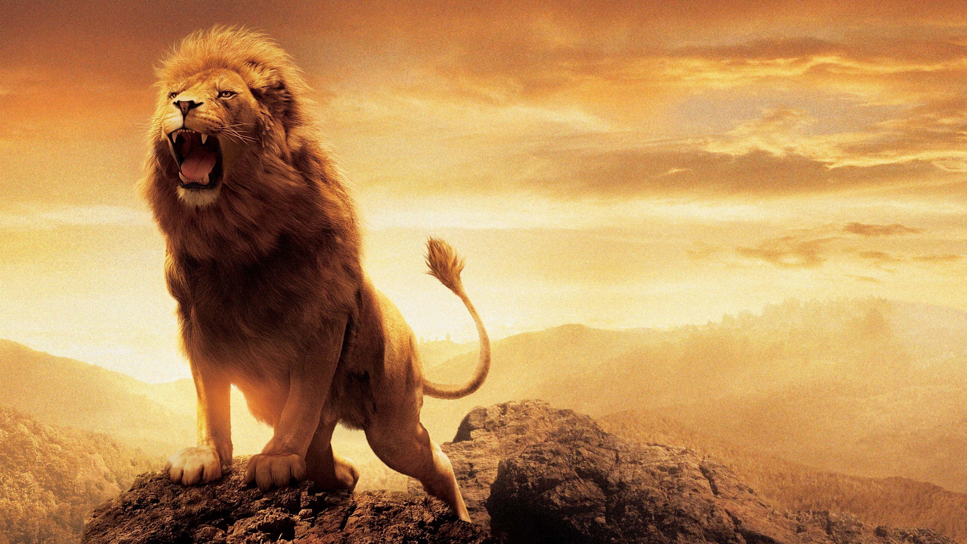 Hình nền sư tử 4K