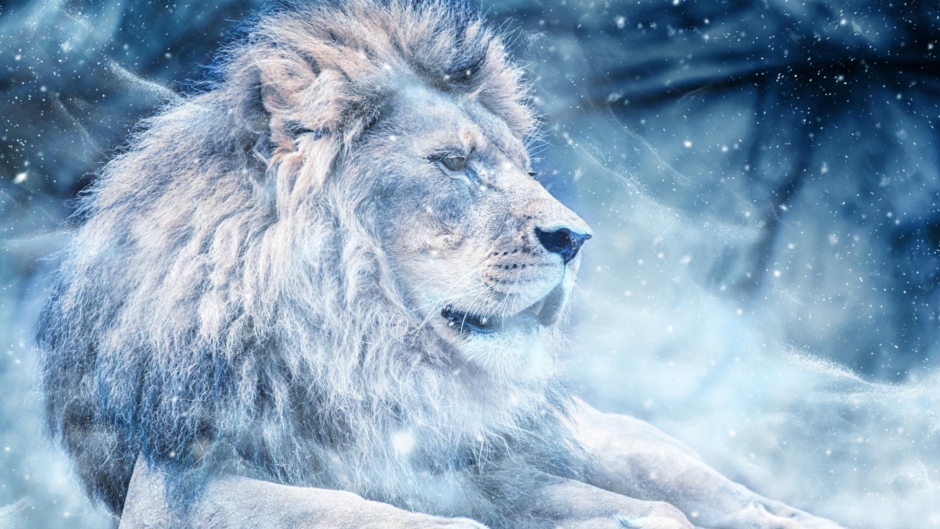 Hình nền sư tử trắng