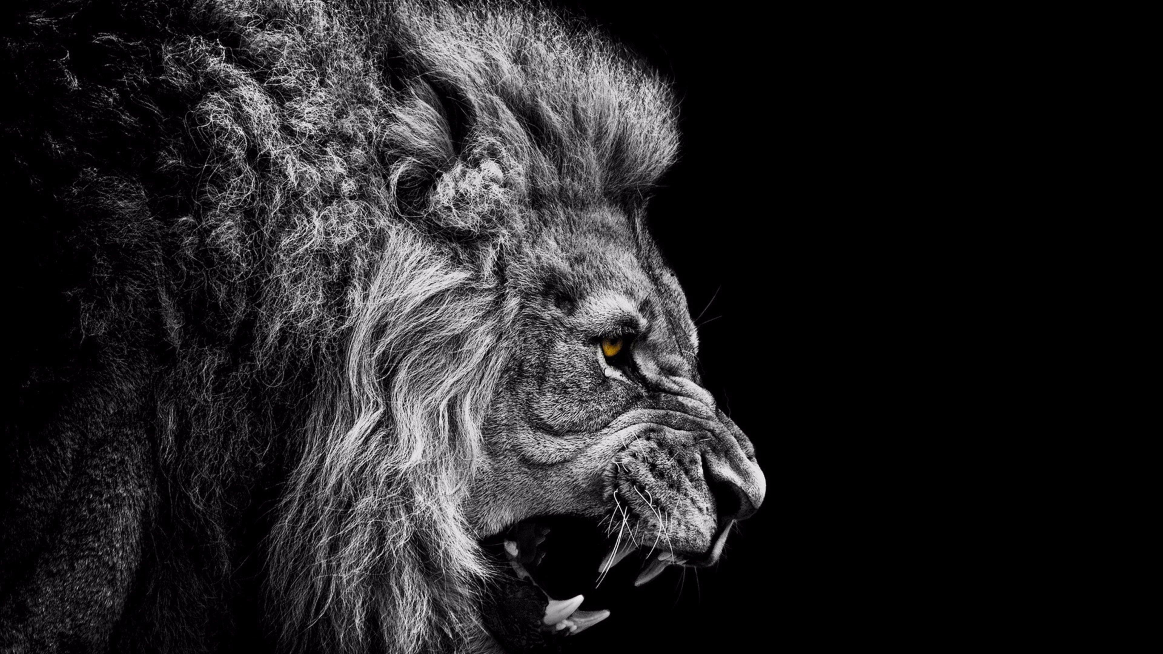 Hình nền sư tử