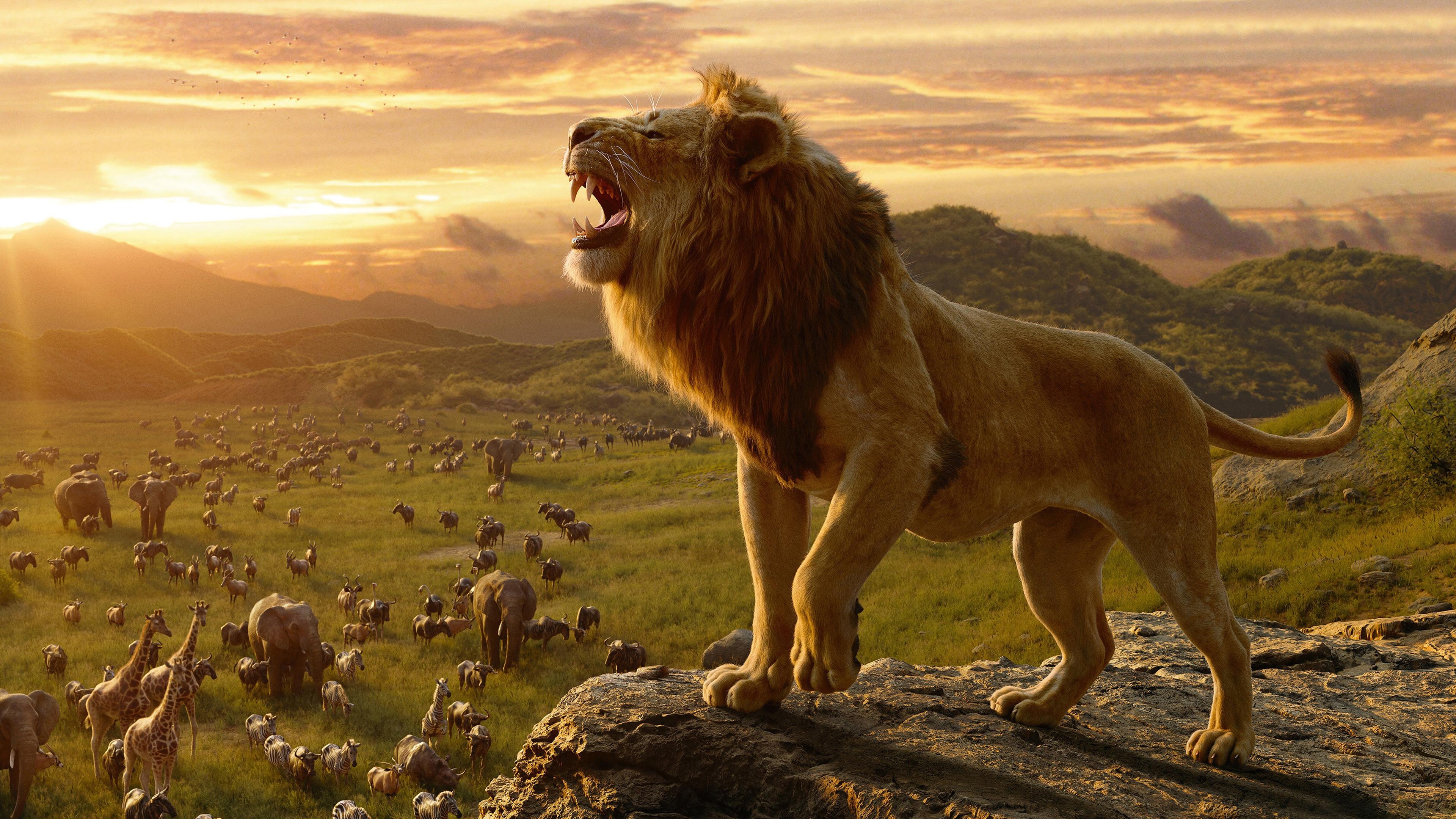 Hình nền vua sư tử