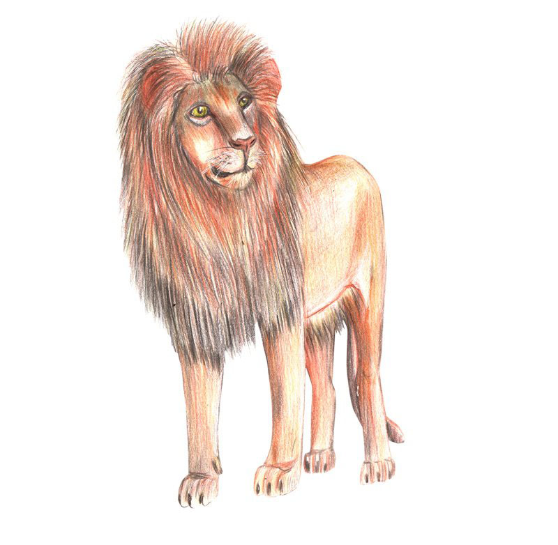 Hình vẽ con sư tử
