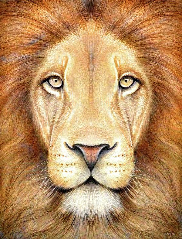 Hình vẽ mặt sư tử