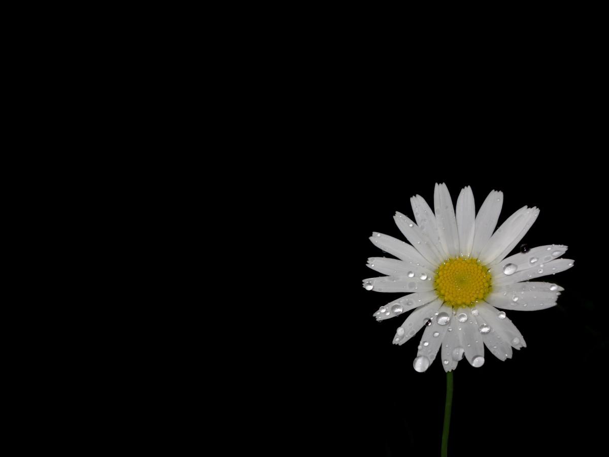 Hình ảnh đẹp giọt nước trên cánh hoa