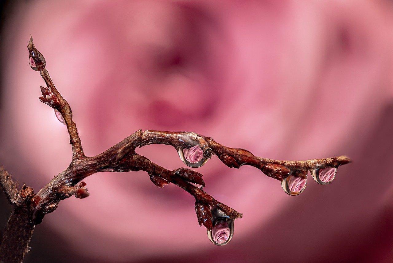 Hình ảnh giọt nước động trên cây