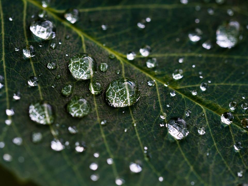 Hình ảnh giọt nước đọng trên lá cây