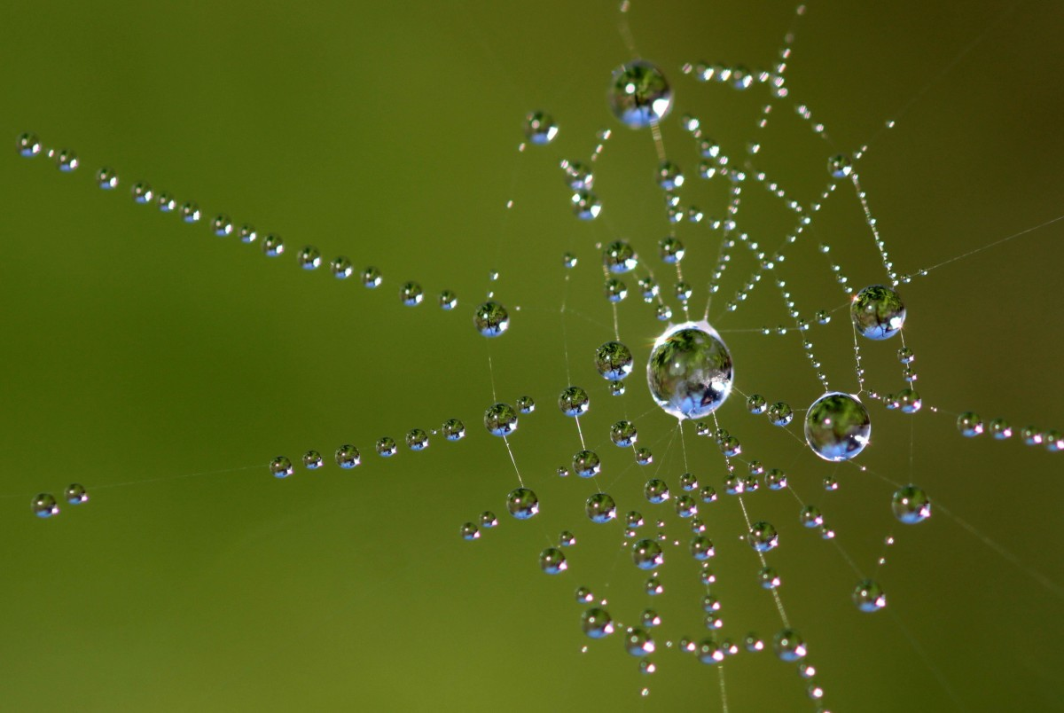 Hình ảnh giọt nước trên mạng nhện