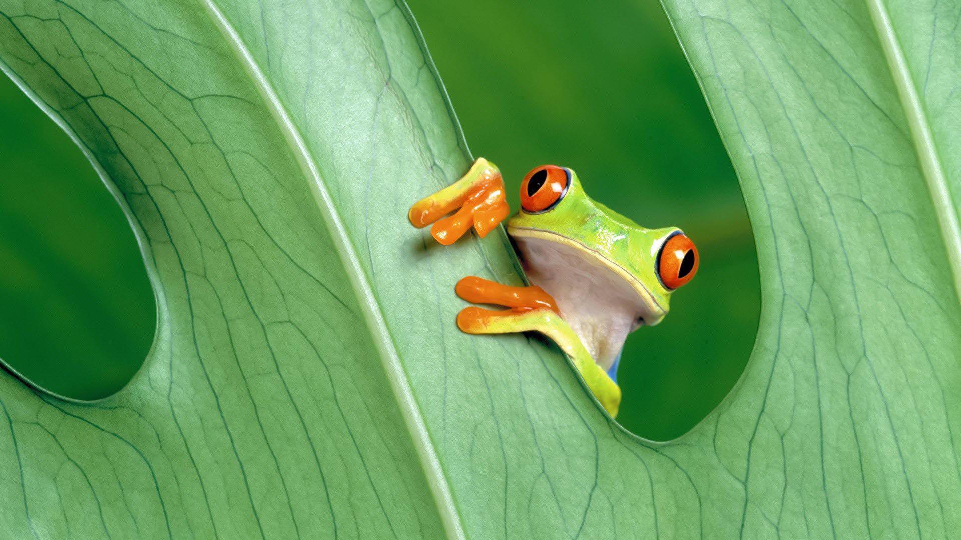 Hình nền chú ếch xanh dễ thương