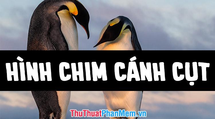 Những hình ảnh con chim cánh cụt đẹp nhất