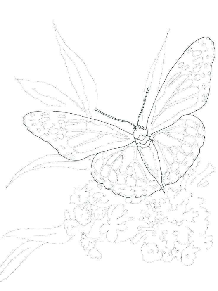 Tranh tô màu con bướm đẹp nhất cho bé
