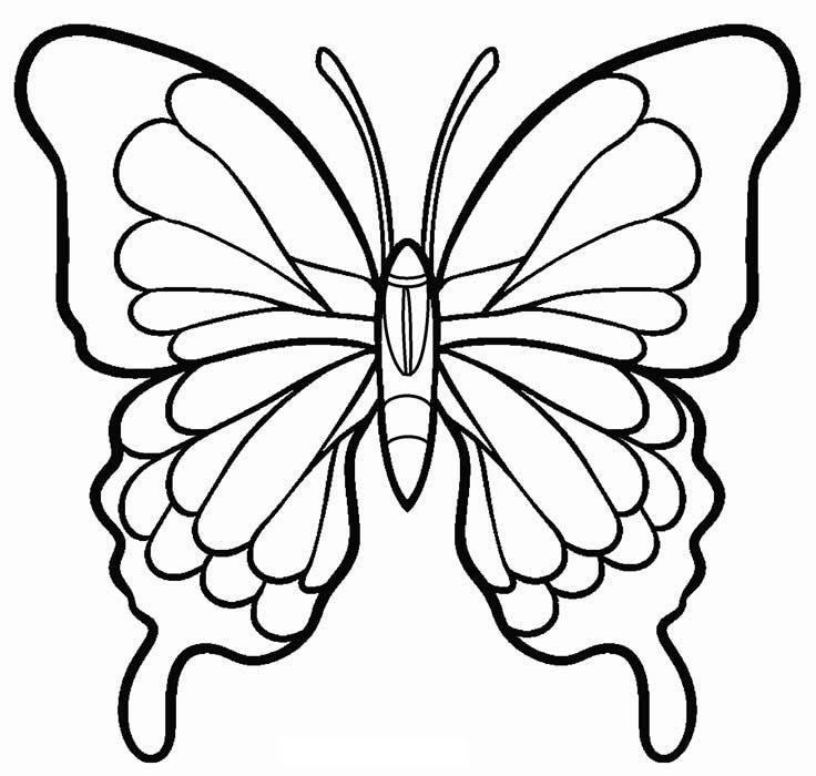 Tranh tô màu con bướm xòe cánh