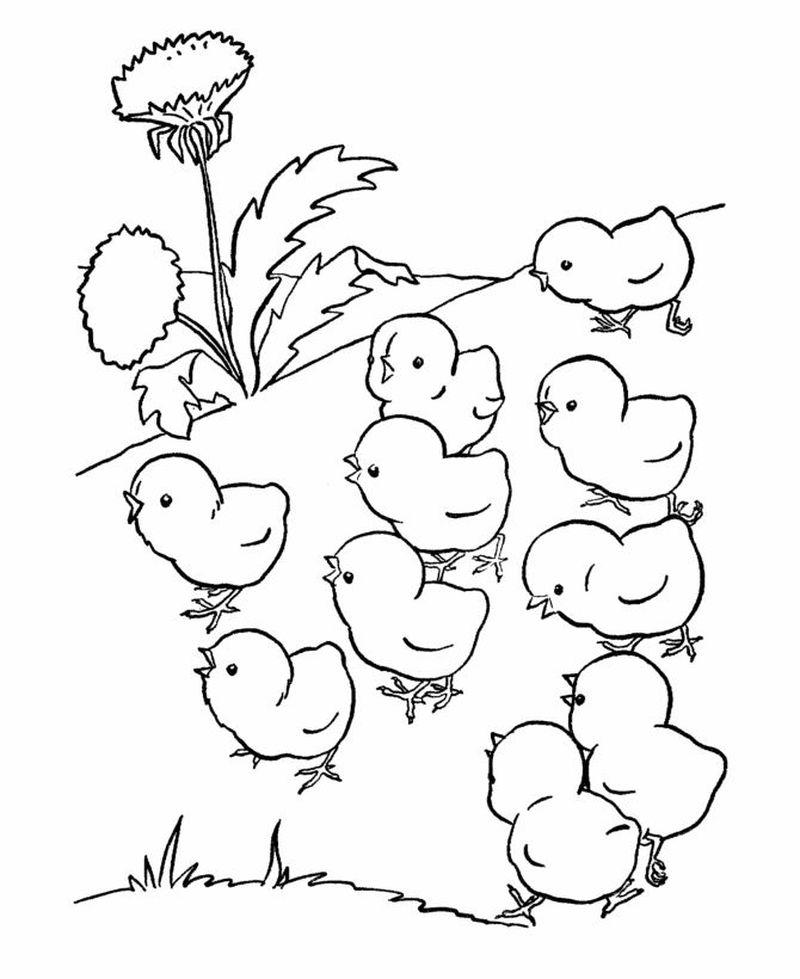 Tranh tô màu gà con đơn giản cho bé