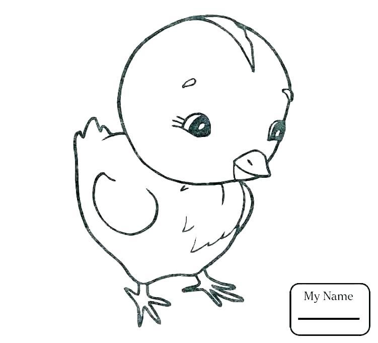 Tranh tô màu gà con đơn giản siêu dễ thương cho bé