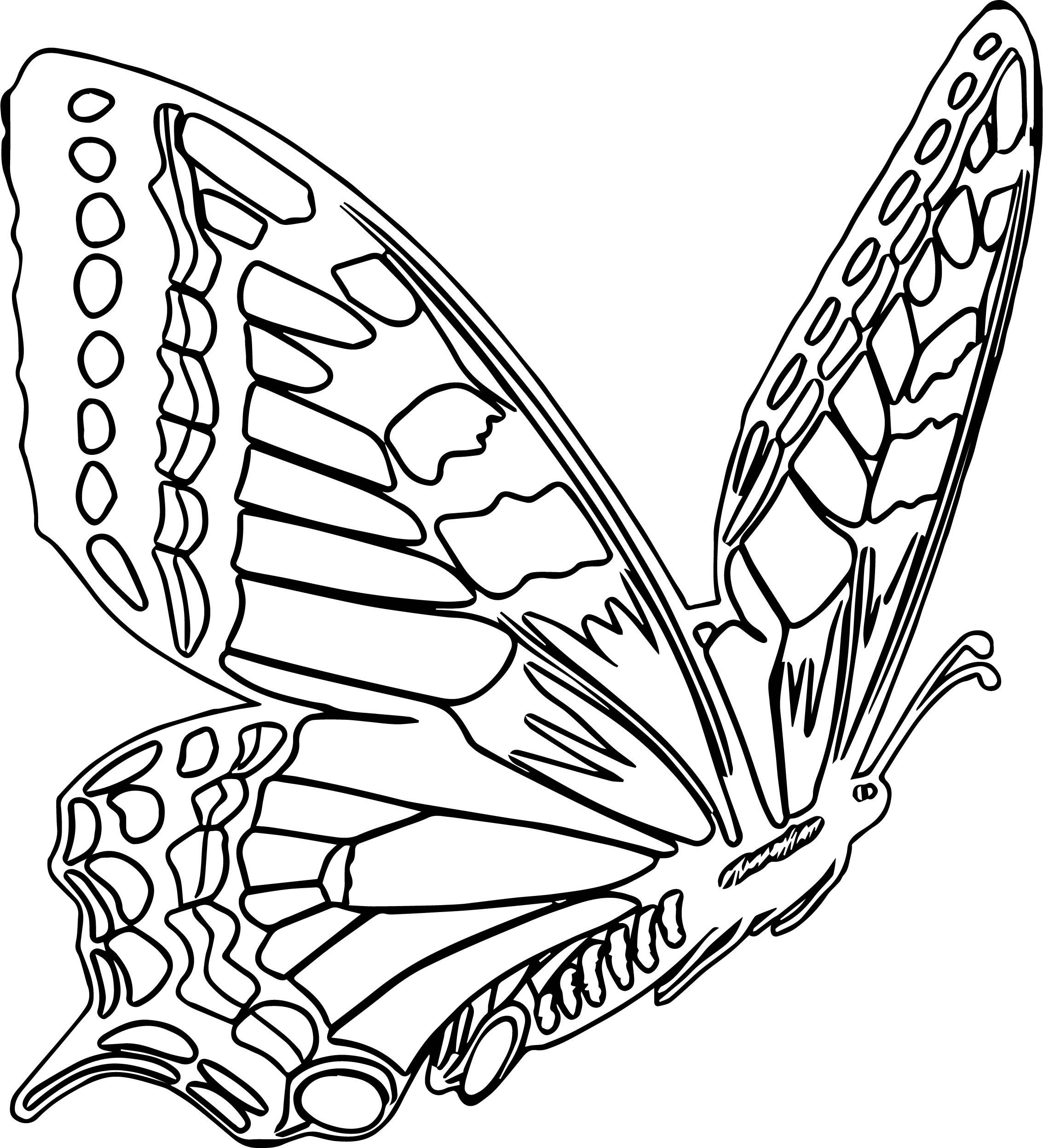 Tranh vẽ tô màu con bướm đẹp