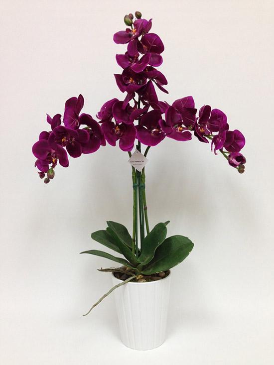 Bó hoa lan tím bẻ chẽ ba hướng