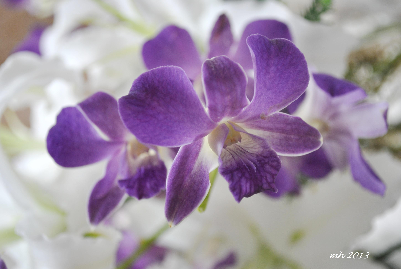Cận cảnh bông hoa lan tím cực đẹp