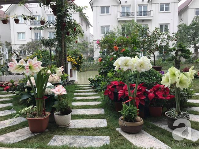 Cây họa huệ trắng trồng trong vườn