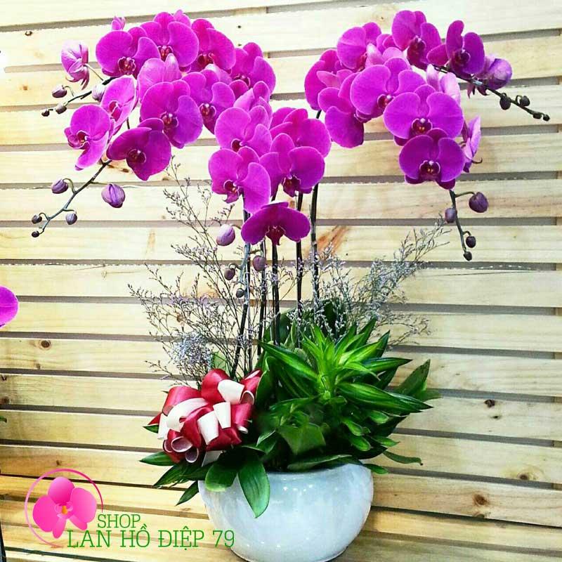 Châu hoa lan tím ba chĩa cực đẹp