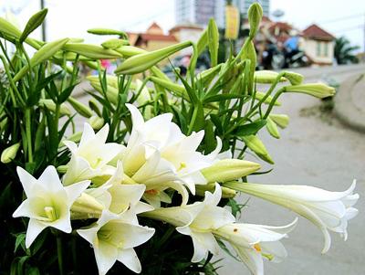 Chợ hoa huệ trắng cực đẹp